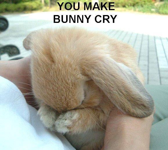 Bunny cry