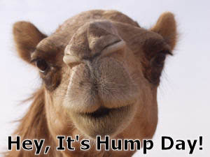 Camel's hump day