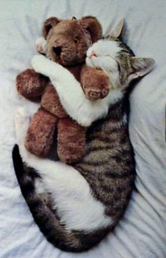 Cat's best friend