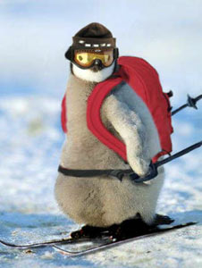 Animal photos - Penguin ski