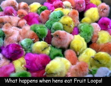 Colourful chickens