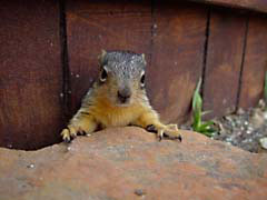 Animal photos - Stuck squirrel