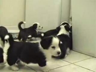 Doggies vs cat