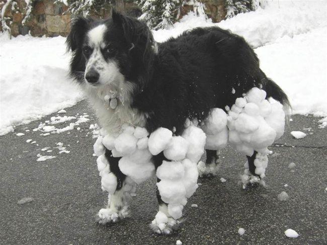 Dog frozen