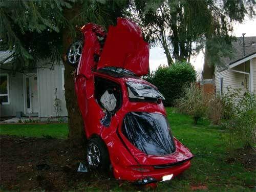 Climb tree by car
