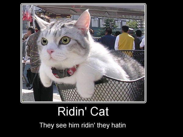 Riding cat