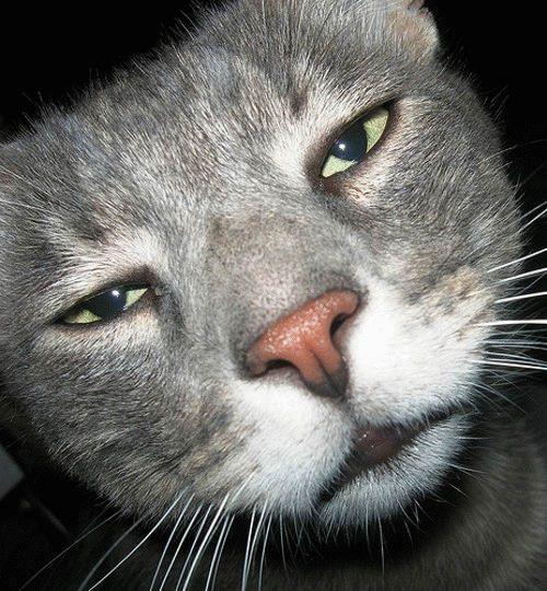 Cat regret