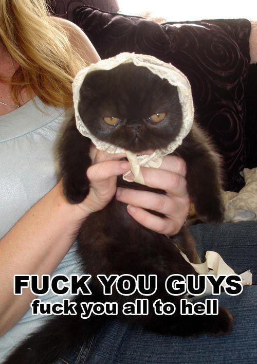 Dissatisfied cat