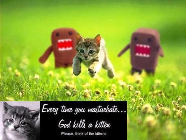 Plz think of the kittens