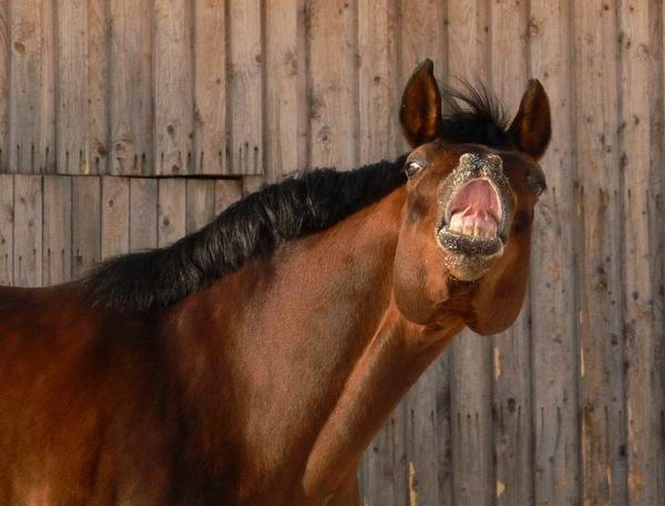 Silly horse's face
