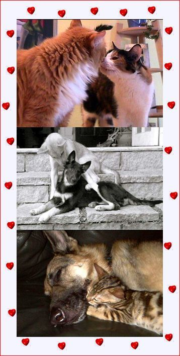 Passionate kisses of dogs