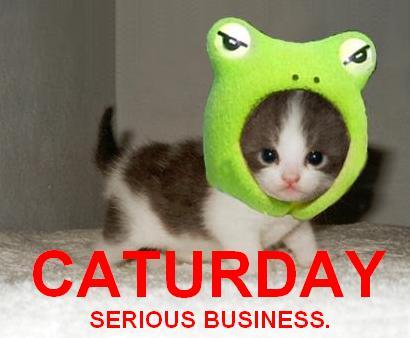 Cat frog