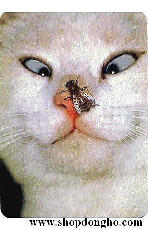 Cat VS fly