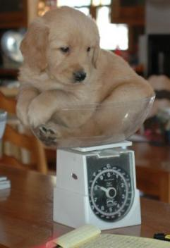 Weigh this dog