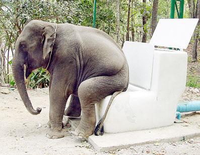Elephant scan