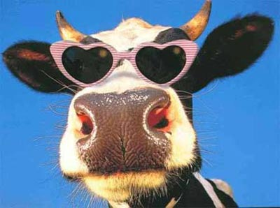 I am a funny cow