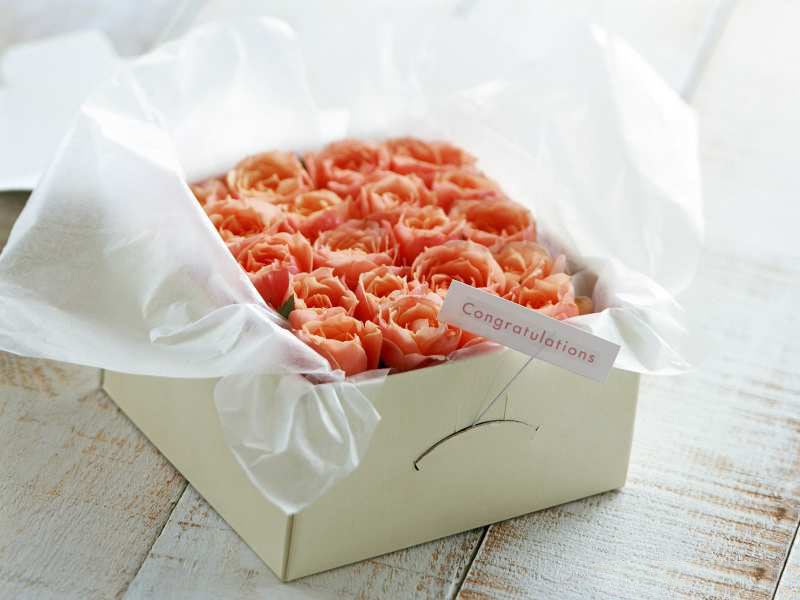 Rose_gift