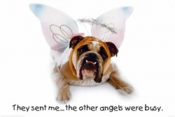Funny photos - Angels were busy