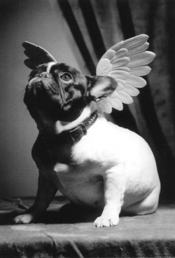 Animal photos - Dog Angel