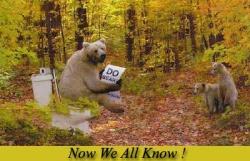 Animal photos - Bear knows
