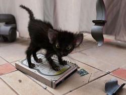 Animal photos - The super mini cat