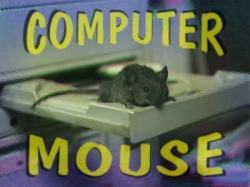 Funny photos - Instead of comp mouse