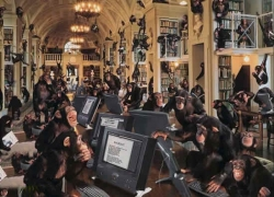 Animal photos - Monkey in Hogwarts