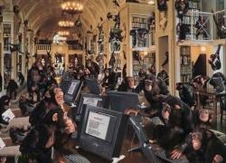 Animal photos - Monkey in Hogwarts