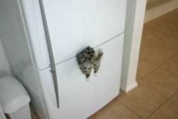 Funny photos - Where is our cat