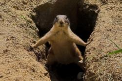 Animal photos - Silly squirrel