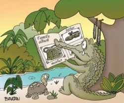 Funny photos - Crocodile's family album