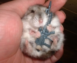 Animal photos - An armed soldier