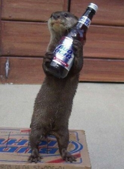 Animal photos - I love Bud Light