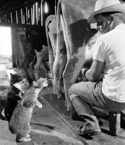 Animal photos - I like fresh milk
