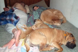 Animal photos - Crowded bed