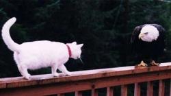 Animal photos - Curious cat