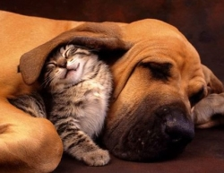 Animal photos - Ear blanket