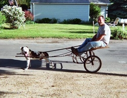 Funny photos - Doggy instead of the horses
