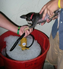 Animal photos - Keg for dog