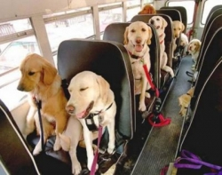 Animal photos - Dog's bus