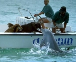 Pet gallery - Dolphin kisses dog