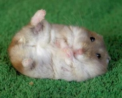 Animal photos - Fat mouse