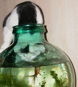 Animal photos - Cat and fish