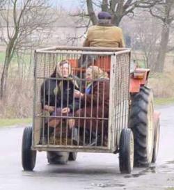 Funny photos - The Limousine
