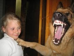 Animal photos - Dog and girl