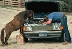 Funny photos - Horse mechanic