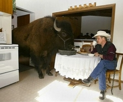 Funny photos - Have lunch with buffalo