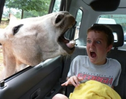 Funny photos - Kid loves animals