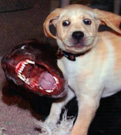 Animal photos - Psycho dog