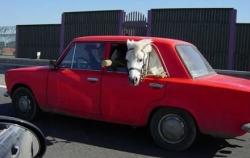 Funny photos - The morden horse carriage